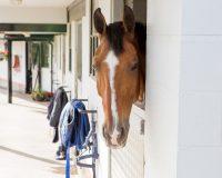 Robert Smith Livery - Happy horses